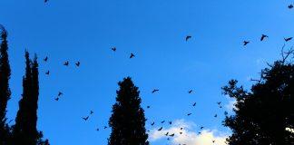 insanlık ve gökyüzü